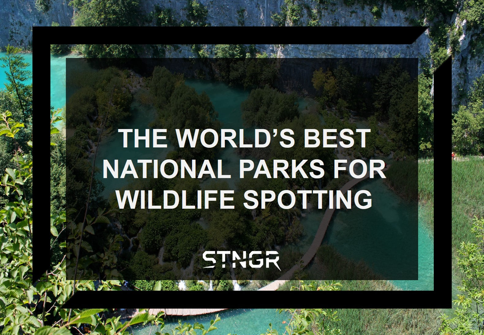 The World's Best National Parks for Wildlife Spotting