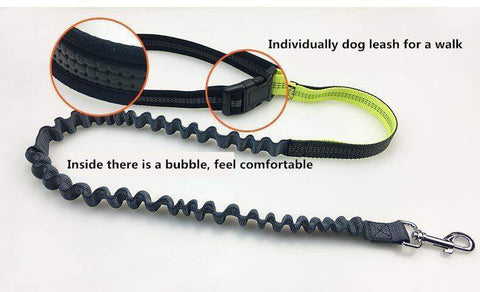 Trendy Holo Handsfree Bungee Dog Leash