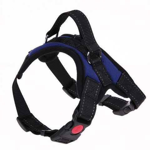 Trendy Holo S / Blue NEW All-In-One Dog Harness ®