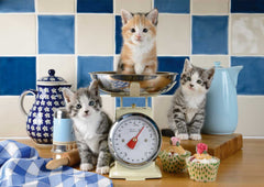 Schmidt Cats in the Kitchen Jigsaw Puzzle (500 pieces)