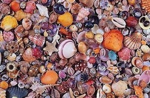 Piatnik Seashell Jigsaw Puzzle (1000 Pieces)