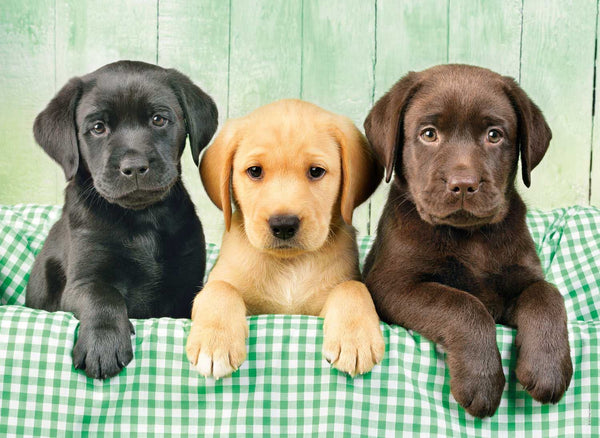 Three Labs Jigsaw Puzzle (1000 Pieces)