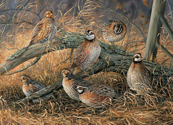 Cobble Hill Quail Jigsaw Puzzle (1000 Pieces)