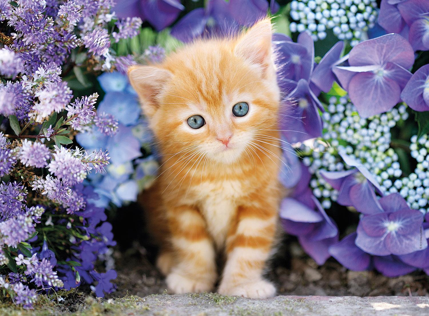 Clementoni Ginger Cat In Flowers High Quality Jigsaw Puzzle (500 Pieces)