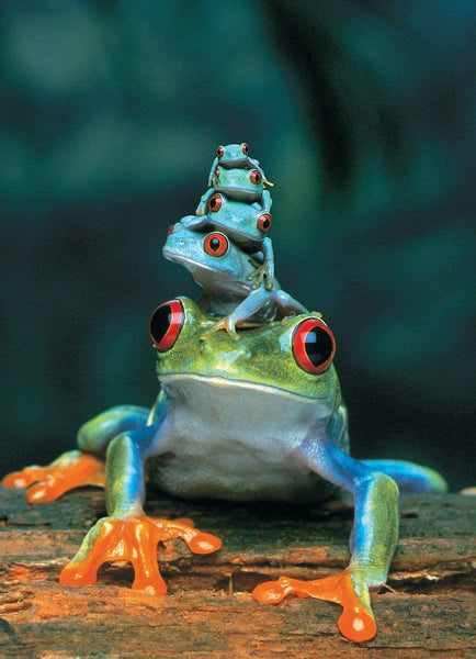 Eurographics Red-Eyed Tree Frog Jigsaw Puzzle (1000 Pieces)