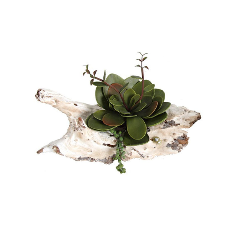 SUCCULENT ON WOOD STAND
