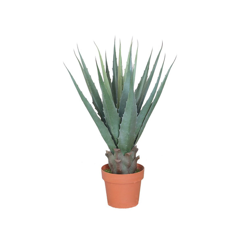AGAVE AMERICANA WITH POT