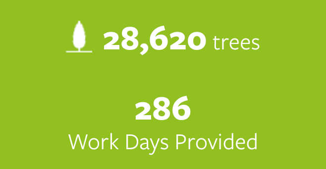 28.620 trees planted and 286 work days provided.