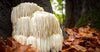 Lion's Mane Mushroom: What it Can Do for You
