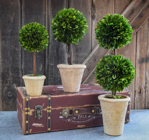 "20"" Double-Ball Preserved Boxwood Topiary"