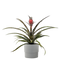 Pineapple Plant Red in 5 In. Ceramic Pot