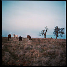 Load image into Gallery viewer, Horses On The San Joaquin County Line.