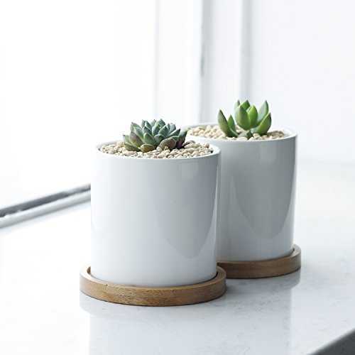 225 & Greenaholics Succulent Plant Pots - 3 Inch Ceramic Cylindrical Containers Small Cactus Planters Flower Pots with Drainage Hole Bamboo Tray