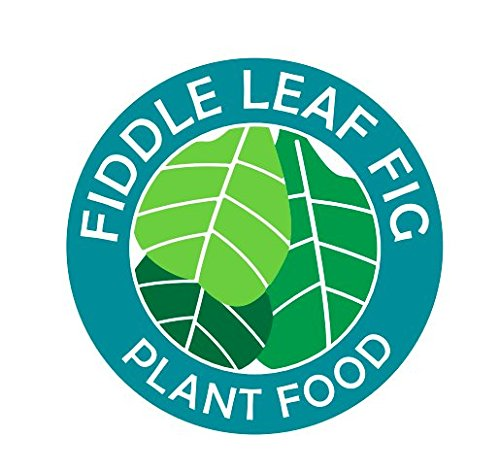 Fiddle Leaf Fig Plant Food
