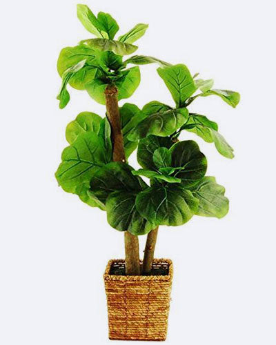 "LCG Florals 38"" Fiddle-Leaf Fig Tree In A Square Basket With Faux Dirt"