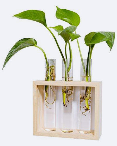 Mkono Wall Hanging Planter Test Tube Flower Bud Vase with Wood Stand