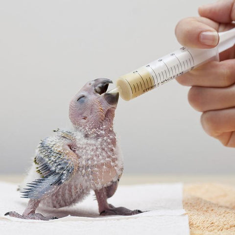 Image of Nibbles Baby Bird Hand Feeding Formula For All Birds