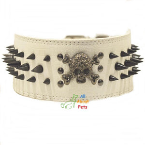 3 Inch Wide Spiked Dog Collar White, metal skull studded available online at allaboutpets.pk in pakistan.