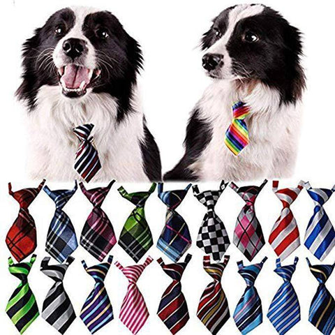 Pet Bow Tie Collar, Pet Neckties available at allaboutpets.pk in pakistan