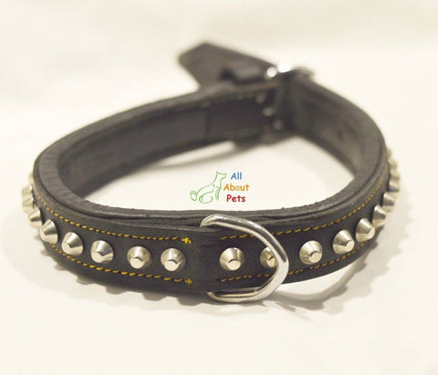 Designer Leather Studded Collar, dog leather collar available at allaboutpets.pk in pakistan.