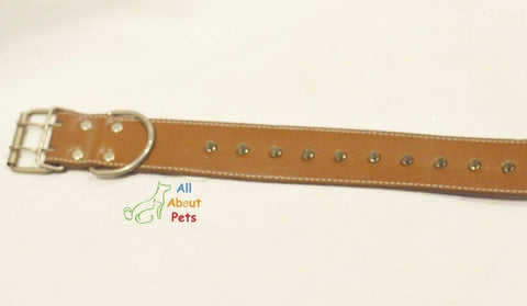 Image of spiked Leather Dog Collar brown Studded available online at allaboutpets.pk in pakistan.