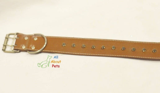 spiked Leather Dog Collar brown Studded available online at allaboutpets.pk in pakistan.