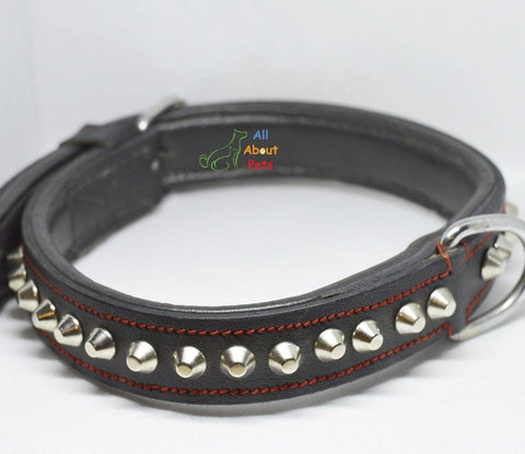Image of Designer Leather Studded Collar, dog leather collar available at allaboutpets.pk in pakistan.