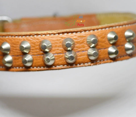 Image of Genuine Leather Studded dog Collar Double Row studs available online at allaboutpets.pk in pakistan.