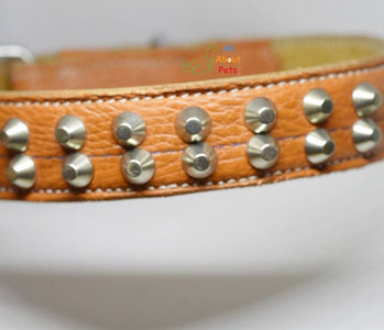 Genuine Leather Studded dog Collar Double Row studs available online at allaboutpets.pk in pakistan.