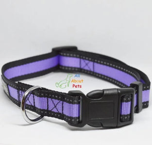 Nunbell Reflective Dog Collar purple color, nylon dog collar available at allaboutpets.pk in pakistan.