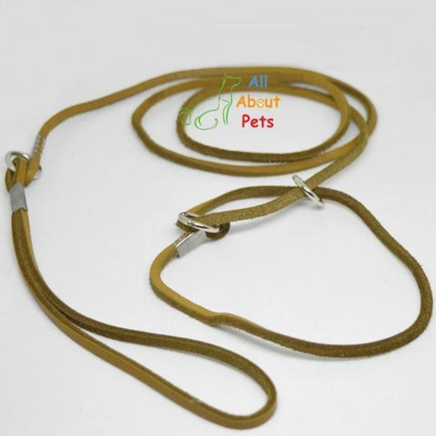 Image of sleek Leather Show Leash For Toy Dog breeds, Pug Show Leash, Shihtzu Show leash available at allaboutpets.pk in pakistan