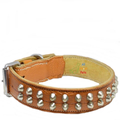 Image of Genuine Leather Studded dog Collar Double Row Orange color available at allaboutpets.pk in pakistan.