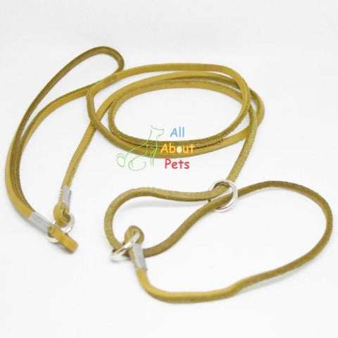Image of Leather Show Leash For Toy Dog breeds, Pug Show Leash, Shihtzu Show leash available at allaboutpets.pk in pakistan