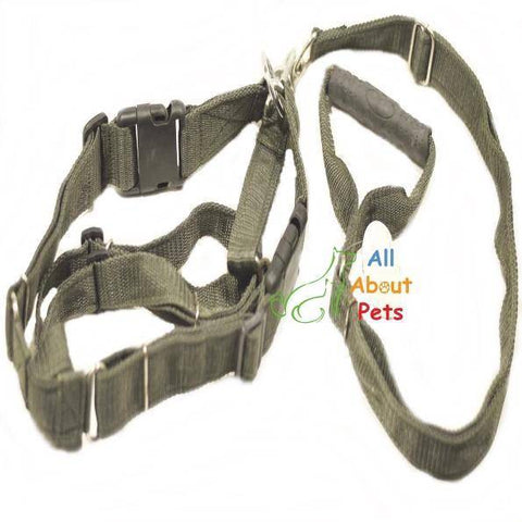 Marine Quality Nylon Dog Harness & Lead available at allaboutpets.pk in pakistan.