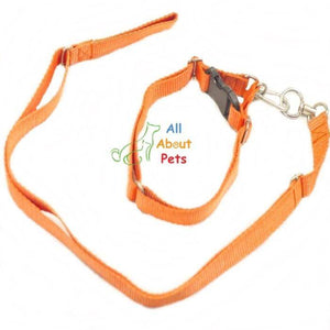 Nylon Lead & Collar For Dogs red color available online at allaboutpets.pk in pakistan.