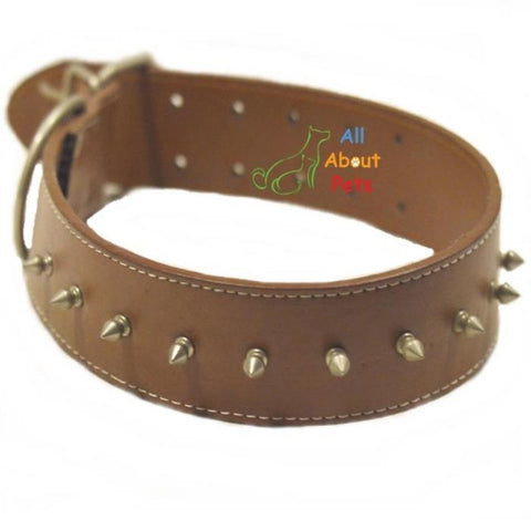 Image of Royal Leather Dog Collar Studded with Spikes brown color available at allaboutpets.pk in pakistan.