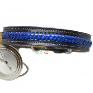 Color Braided Genuine Leather Collar Black, blue and black dog collar, stylish dog collar, designer dog collar available at allaboutpets.pk in pakistan.