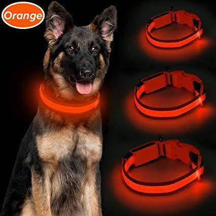 LED Dog Collar orange color, Glow In Dark Dog Collars available at allaboutpets.pk in pakistan