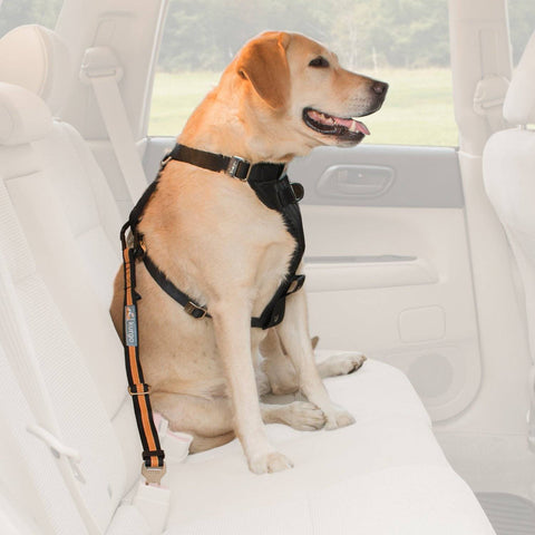 Image of Dog Safety Belt Ferplast adjustable available at allaboutpets.pk in pakistan.