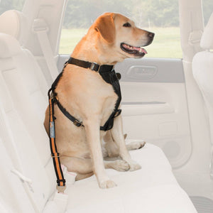 Dog Safety Belt Ferplast adjustable available at allaboutpets.pk in pakistan.