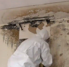 Mold Cleanup Kansas City