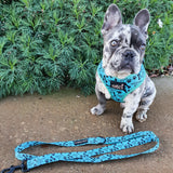 Handsome Boy: Adjustable Harness - Glammah Pooch Boutique