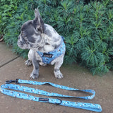 Do you even walk Bro? : Adjustable Harness - Glammah Pooch Boutique