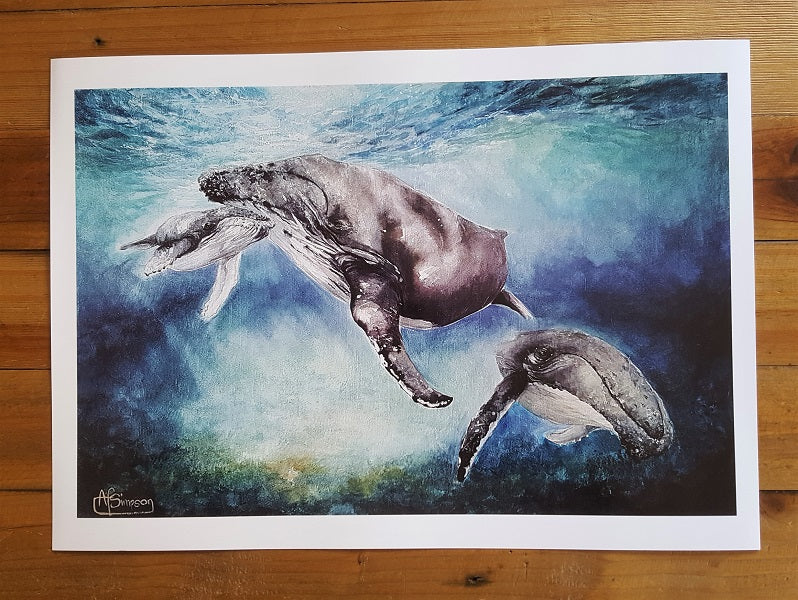 'Shelter' Humpback Whales A3 Print by Allie Simpson