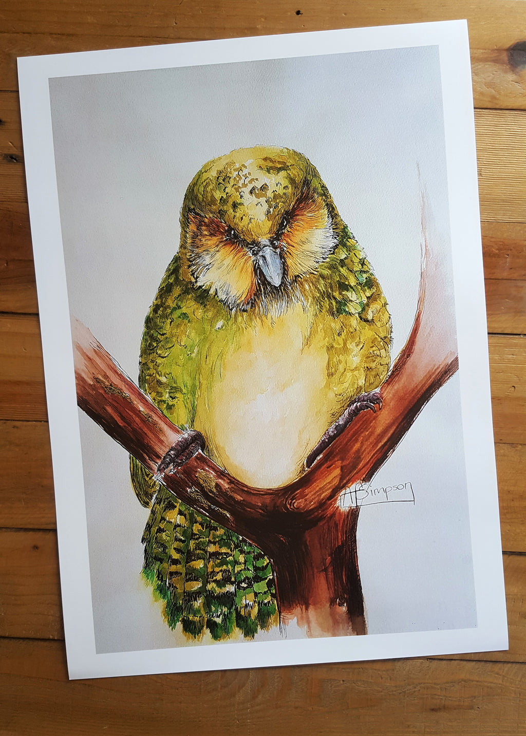 Watchful Moment Kakapo  by A. Simpson A3 Art Print