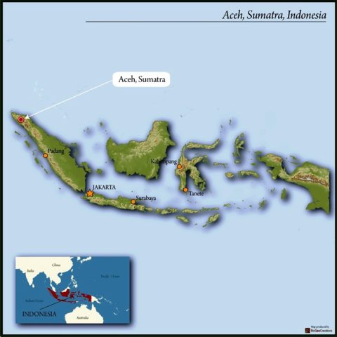 madison-wi-coffee-aceh-sumatra-sara-ate-p3