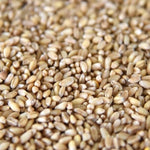 Pueblo White Wheat (culinary)