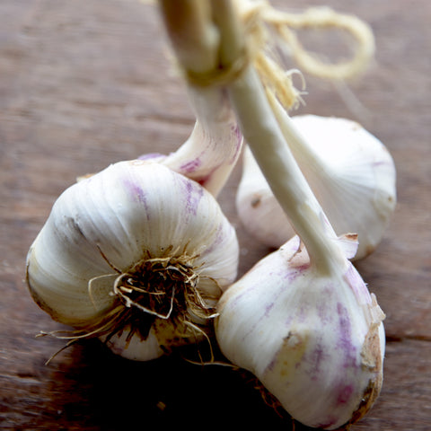 Garlic Bunch, 3 heads