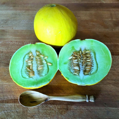 Golden Honeymoon (Cucumis melo)