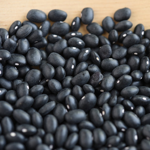 Hopi Black Bean (Phaseolus vulgaris)